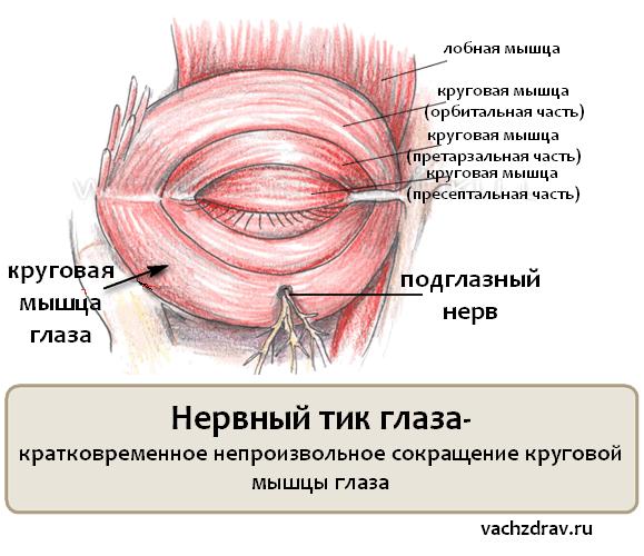 Нервный тик глаза у взрослого